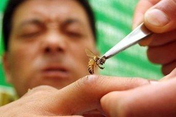Лечение насекомыми: дикие, но эффективные методы