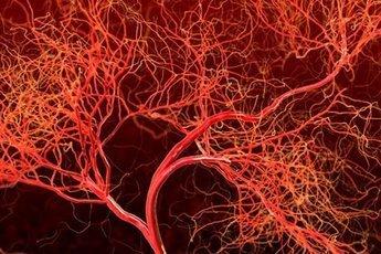 В костях человека обнаружены мелкие кровеносные сосуды