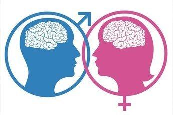 Различия мужского и женского мозга формируются еще в утробе