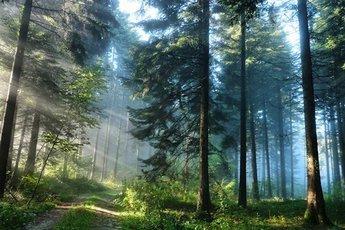 Врачам разрешат лечить с помощью природы