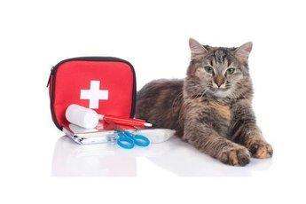 От рака груди спасла… кошка