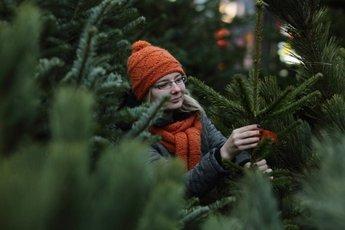 Как правильно выбрать елку?
