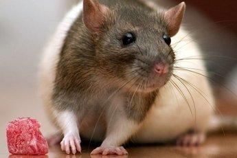Ученые создали имплантат для похудения