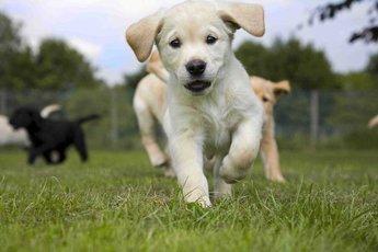 Три плюса завести собаку