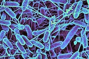 Человечество умрет из-за резистентных бактерий
