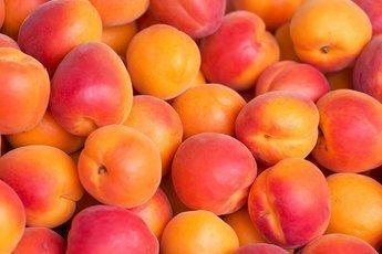 Врачи:абрикосы помогут поддержать здоровье печени
