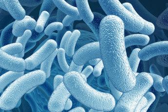 Пребиотики как полезная пища для хороших бактерий