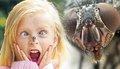 Укусы насекомых и как от них защититься