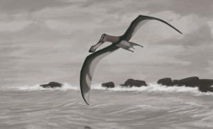 Os cientistas descobriram uma nova espécie de pterossauro - uma cópia do dragão das fadas