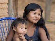 Organizações indígenas e coalizão de ONGs notificam para parar de vender carne originada de desmatamento