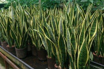 Домашние растения, которые не требуют ухода