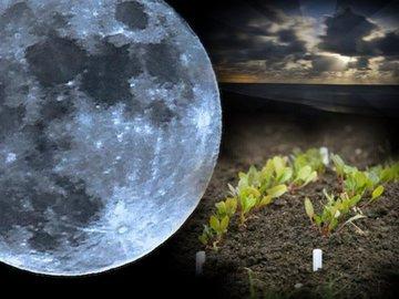 Лунный календарь и ваш дом:  выбираем идеальное время для хозяйственных работ