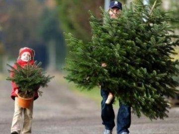 Как правильно выбрать искусственную елку к празднику
