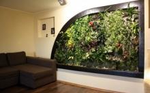 Как сделать зеленую живую стену из растений у себя дома?