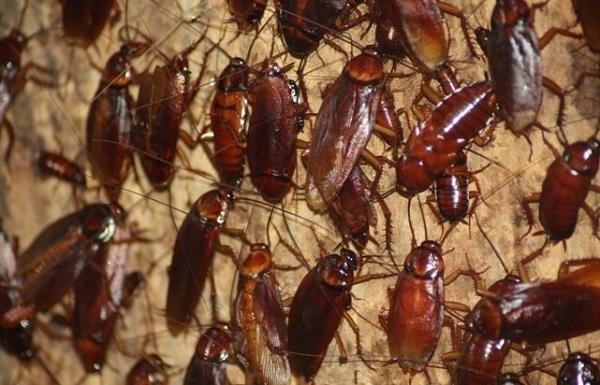 Тараканы – к добру и прибыли?