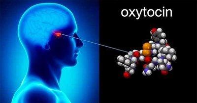Окситоцин: панацея от любого страха или потенциальный супермошенник?