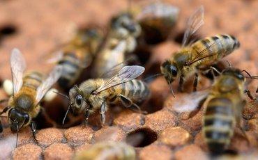 Почему мы ненавидим ос и любим пчел?