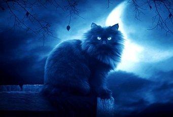 Магическая тайна, которую хранит ваша кошка