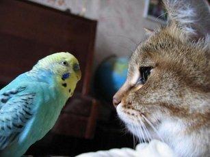 Попугай нашел общий язык с кошками