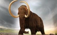 О смерти мамонта ученым рассказала ДНК