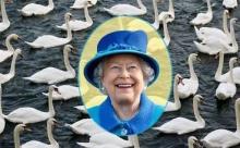 Все лебеди Англии – собственность королевы?