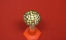 Грибы, напечатанные на 3D-принтере, могут производить электричество