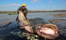 Карп-великан был выловлен тайскими рыбаками