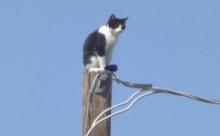 В Пензенской области кот залез на столб и уже два дня не может спуститься