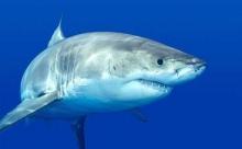 Ростовские рыбаки пустили утку про акулу