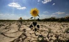 На юге России климат станет более засушливым