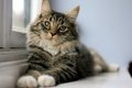 Вся правда о кошках: это интересно