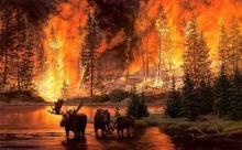 Лесные пожары и как с ними боролись в уходящем году