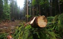 Самый криминальный лесной регион в стране - Иркутская область