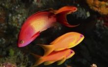 """Рыбы стараются """"перекричать"""" внешний шум"""