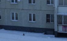 В Челябинске хозяин выгуливает собаку через окно, не выходя из квартиры