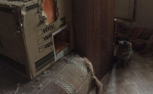 В Петербурге, запертые в квартире коты, затопили несколько квартир