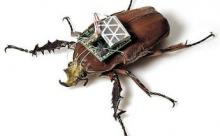 Роботов-насекомых создают в США