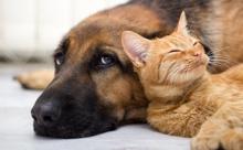 В России назавали самые популярные клички кошек и собак